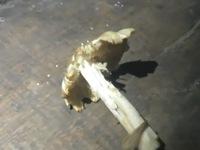 6 người bị ngộ độc do ăn nấm rừng