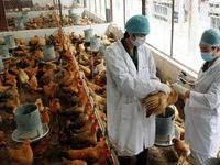 Bạc Liêu tập trung phòng chống dịch cúm gia cầm