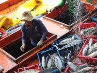 10.000 hộ dân khai thác thủy sản ở Cà Mau được chuyển đổi nghề
