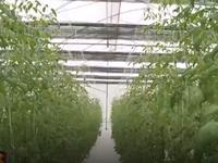 Khởi động gói tín dụng cho nông nghiệp công nghệ cao