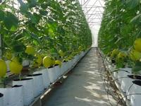 Hà Nội đề xuất bổ sung 7 khu nông nghiệp ứng dụng công nghệ cao