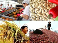 Xuất khẩu nông sản đạt hơn 17 tỷ USD