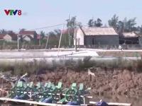 Nhiều hộ nuôi tôm Nghệ An 'trắng tay' sau bão số 10