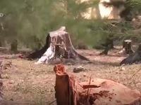 Khởi tố vụ phá rừng tại Đăk Nông