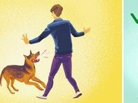 Cần làm gì khi bị chó dữ tấn công