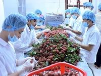 Xuất khẩu điều và rau quả lần đầu đạt 3 tỷ USD