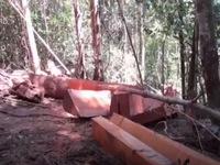 Thủ tướng chỉ đạo xử lý nghiêm vụ phá rừng Ea Súp