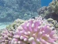 Vẻ đẹp những rạn san hô tại Biển Đỏ