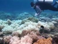Chiêm ngưỡng rạn san hô sống lớn nhất hành tinh