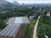 Du học sinh trở về từ Israel khởi nghiệp nông nghiệp