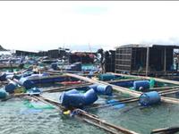 Khánh Hòa: Tan hoang vùng nuôi thủy sản, nan giải tái thiết sau bão