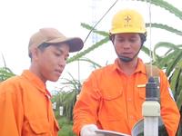 Hiệu quả mô hình đèn tiết kiệm điện trong trồng thanh long