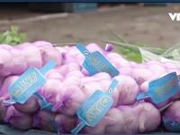 Nông sản lạ trên thị trường châu Âu mang lại lợi nhuận lớn