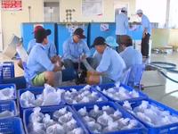 Sóc Trăng bắt đầu làm Khu sản xuất tôm giống chất lượng cao