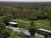 Vietnam's wetlands under threat
