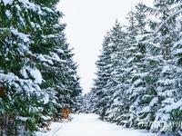 Ngắm tuyết trắng Nhật Bản qua những bức ảnh đẹp yên bình