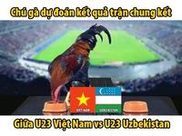 Chung kết U23 châu Á 2018: Gà 'tiên tri' dự đoán Việt Nam vô địch