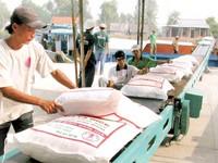 Vượt qua giá gạo Thái Lan xuất khẩu, gạo Việt xác lập đỉnh cao mới