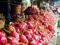 Giá thanh long ở chợ, siêu thị cao gấp 30 lần giá tại vườn