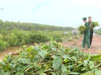 Buổi sáng tại Khu bảo tồn đa dạng sinh học cây dược liệu Đồng Tháp Mười
