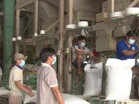Tháo gỡ rào cản xuất khẩu gạo