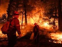 Điều tra về cháy rừng ở California, Mỹ