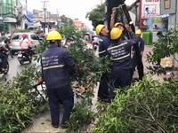 TP.HCM thu dọn cây xanh ngã đổ sau bão số 9