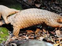 Đề xuất bổ sung quy định bảo vệ động vật hoang dã