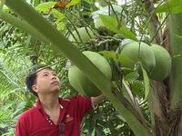 Dừa lọt top trái cây xuất khẩu cao nhất