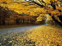 Russia's golden autumn attracts Vietnamese tourists