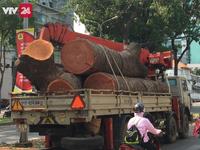 TP.HCM: Đốn hạ, di dời cây xanh trên đường Tôn Đức Thắng để xây cầu Thủ Thiêm 2