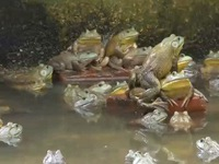Trang trại ếch ở Singapore