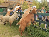 Trang trại thú nuôi vô cùng đáng yêu tại thành phố London