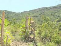 Khánh Hòa: Gia tăng phá rừng, lấn chiếm đất để đón đầu dự án