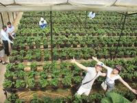 """Du lịch nông nghiệp Việt Nam: """"Mảnh đất vàng"""" chờ khai phá"""