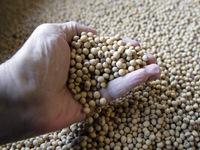 Trung Quốc xem xét gỡ bỏ thuế nhập khẩu đối với đậu nành Mỹ
