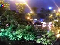Nhiều cây xanh gãy đổ do mưa giông chiều tối 18/5 tại Hà Nội