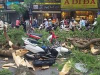 Hà Nội: Cây cổ thụ bật rễ, đè trúng 5 người trên phố Quán Sứ