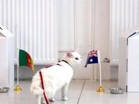 Gặp gỡ 'chú mèo tiên tri' trước thềm World Cup 2018