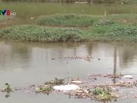 Rác thải nông nghiệp tràn ngập các hồ nước tại Đà Lạt