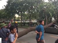Lốc xoáy ở TP.HCM, nhiều nhà bị tốc mái, cây xanh gãy đổ