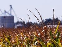Căng thẳng thương mại Mỹ - Trung sẽ tác động mạnh lên thị trường nông sản toàn cầu