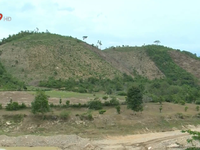 Gia tăng lũ lụt do khai thác trắng rừng trồng