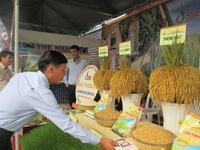 Việt Nam đẩy mạnh xuất khẩu sản phẩm gạo cấp cao