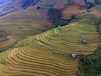 Ruộng bậc thang Mù Cang Chải - Một trong những nơi đẹp nhất khu vực Đông Nam Á
