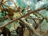 Bảo tàng sinh học Tây Nguyên - Điểm đến không nên bỏ lỡ ở Đà Lạt