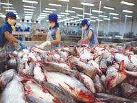 Tra fish exports to China surge