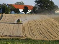 Heatwave ravages crops in Germany