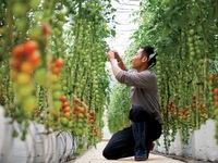 Digital training for Vietnamese farmers