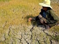 Quang Binh faces severe drought